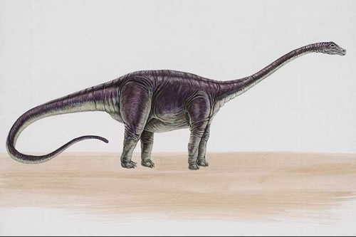 [Image: Diplodocus051.jpg]