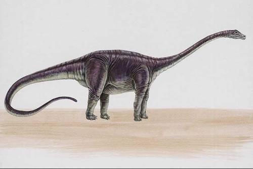 [Image: Diplodocus051.jpg]