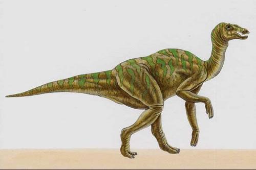 Hadrosaurus Dinosaur Pictures