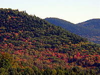 Foliage and Mountains